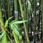 Bambou modèle 3D Conception jardin