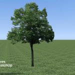Tutoriel vidéo Les arbres dans SketchUp